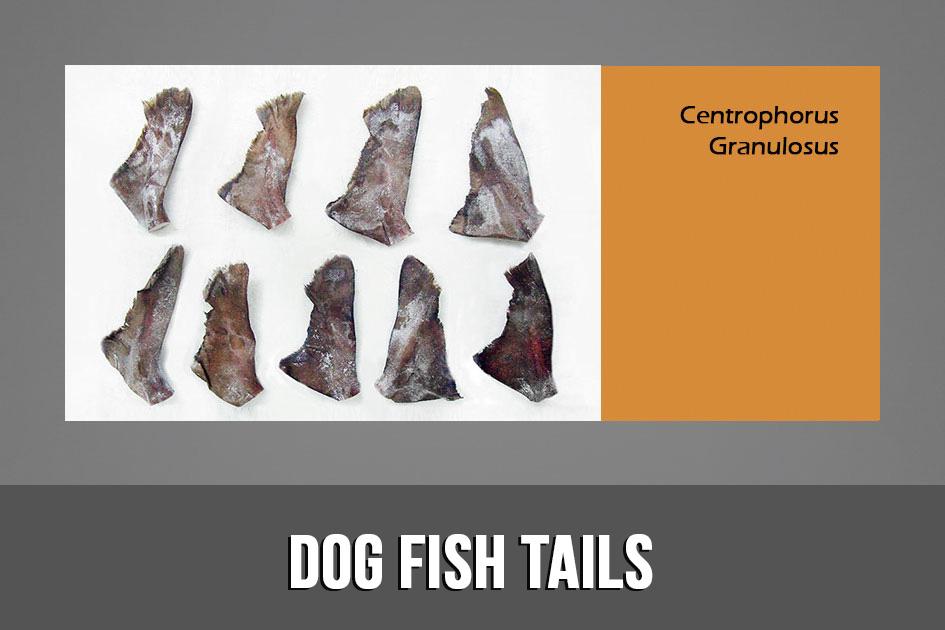 Dog fish tails